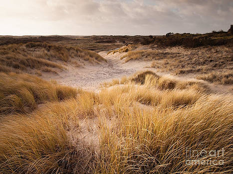 Dune Landscape in Winter Sun by David Hanlon