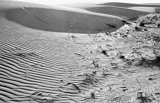 Dunes by Erika Weber