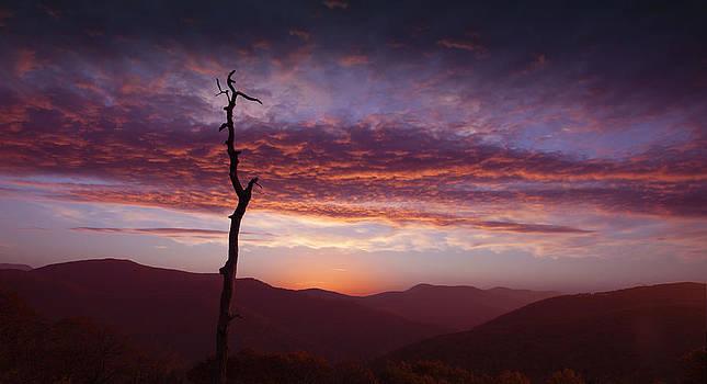 Regina  Williams  - Early Morning Sunrise