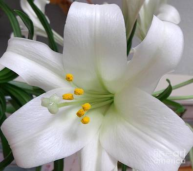 Easter Lily by Gail Matthews