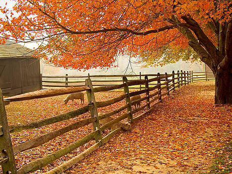 Fall Barnyard by Andrew Kazmierski