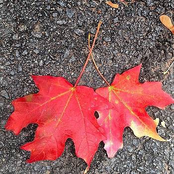 Fall Colors by Subhash Limaye