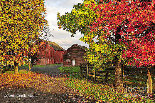 Fall on a Farm in Oregon by Tonia Noelle