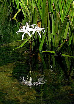 Deep Reflection of Flower  by John Myers