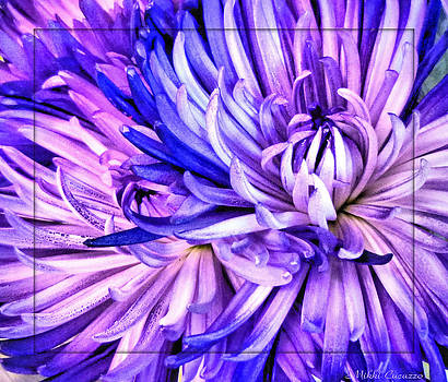 Flower closeup by Mikki Cucuzzo