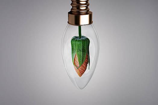 Flower in Bulb by Bess Hamiti