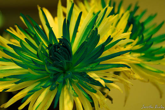 Flower by Jennifer Burley