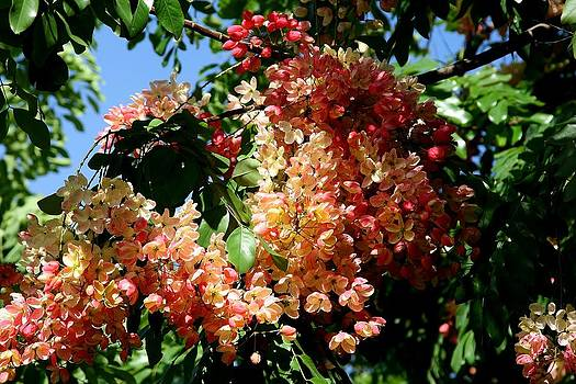 Flowers of Hawaii by Galina Kolpatcheva