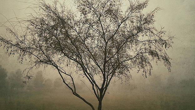 Saija  Lehtonen - Foggy Morning