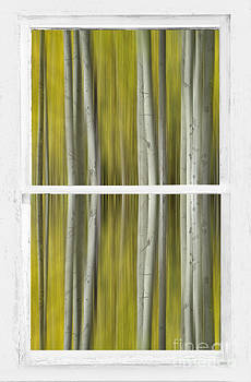 James BO  Insogna - Forest Dream Through White Rustic Distressed Window
