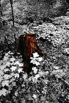 Forest Floor by Jon Lord