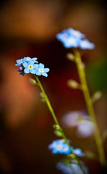 onyonet  photo studios - Forget Me Not
