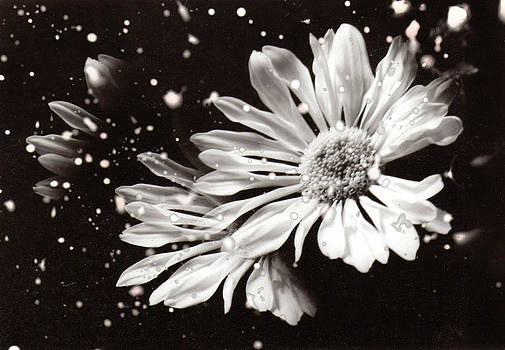 Karin Thue - Fractured Daisy