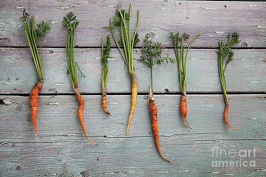 Mythja  Photography - Fresh carrots