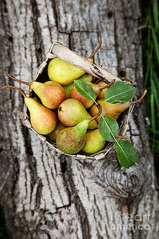 Mythja  Photography - Fresh pears