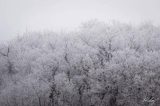 Frosty Morning by Zach Connor