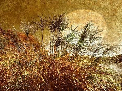 Golden Sunset by Judy Palkimas