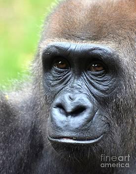Dale   Ford - Gorilla