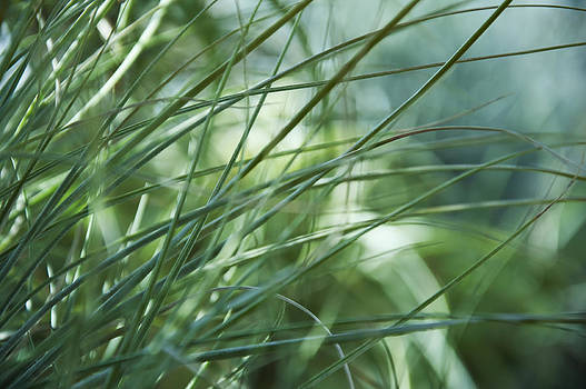 Grass Abstract by Sabina  Horvat