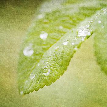 Green leaves by Lars Hallstrom