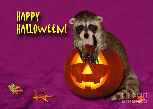 Jeanette K - Halloween Raccoon