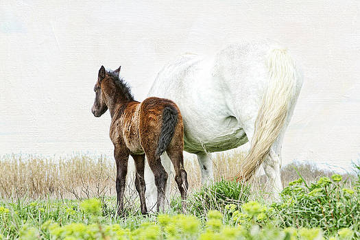 Happy - Camargue Foal and Mum by Lisa Cockrell