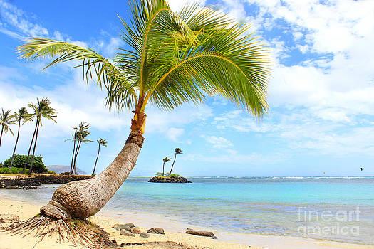 Hawaiian Paradise by Kristine Merc