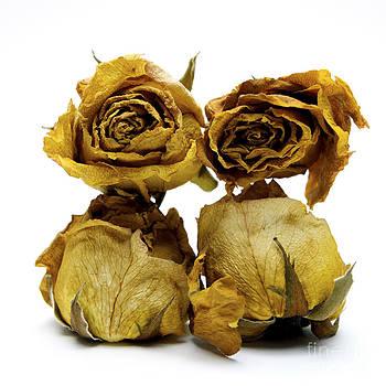 BERNARD JAUBERT - Heap of wilted roses