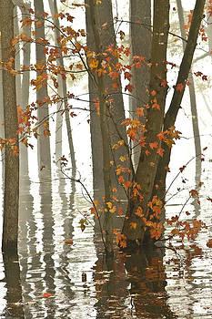High Water by Bill Swindaman