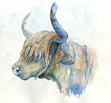 Highland cow by Tania Vasylenko