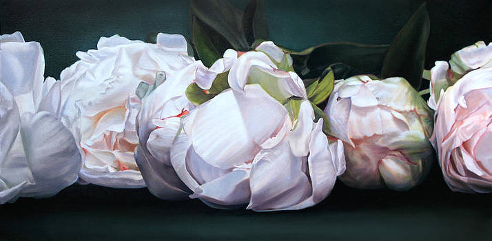 Horizontal peonies by Thomas Darnell