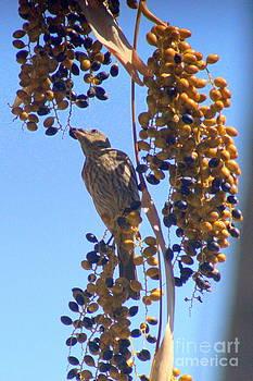 Gerhardt Isringhaus - Hungry Little Bird II