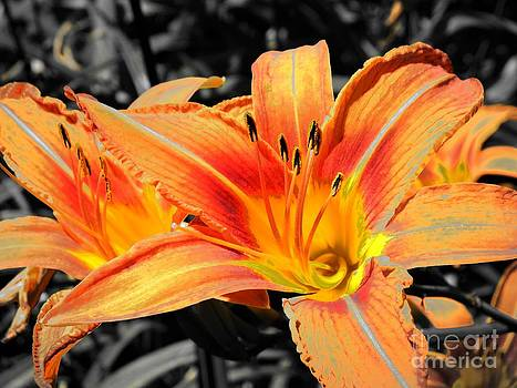In Bloom by Chad Thompson