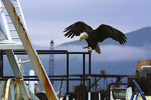 Industrial Eagle by Jack Molan