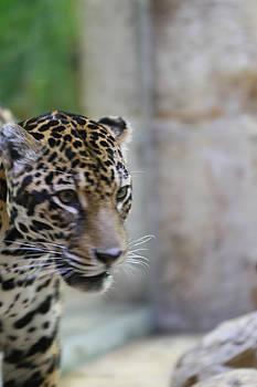Jaguar by Tinjoe Mbugus