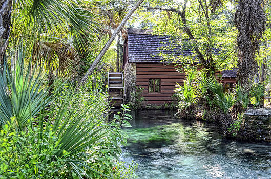 Juniper Springs by Bob Jackson