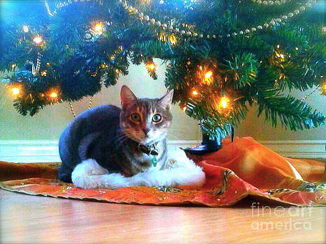 Kitten's Christmas by Nancy Belle