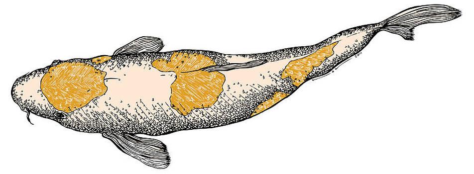 Koi Fish by Karl Addison