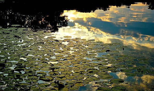 Lake Chapman Reflection by Wendell Lowe