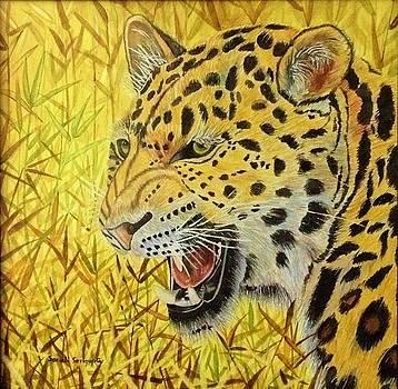 Leopard by Sonali Sengupta