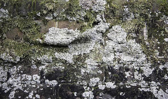 Teresa Mucha - Lichen and Moss