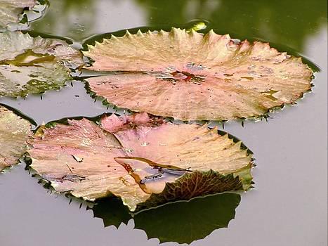 Lily Pads by Jennifer Wheatley Wolf