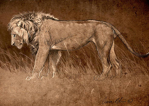 Lion Sketch by Aaron Blaise
