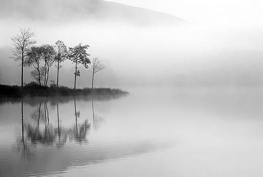 Loch Ard trees in the mist by Grant Glendinning