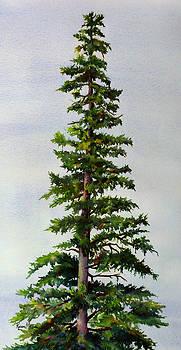 Lone Spruce by Karen Mattson