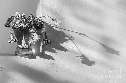 Svetlana Sewell - Long Shadows