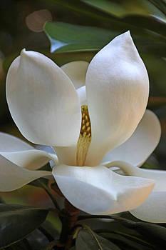 Carolyn Stagger Cokley - Magnolia2555
