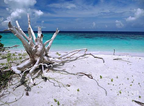 Maldives 11 by Giorgio Darrigo