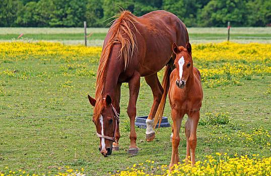Mama and Baby by Carolyn Ricks