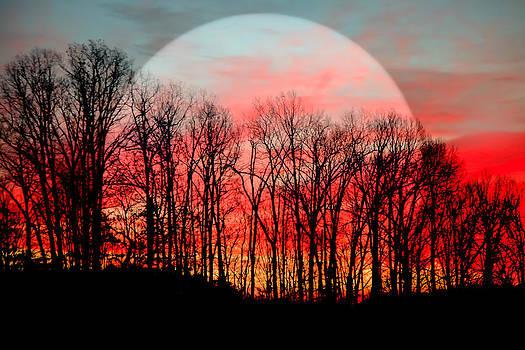 Moon Dance by Karen Wiles